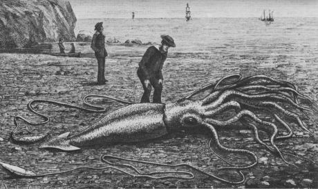 1024px-Giant_squid_catalina2