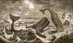 spermwhales fighting