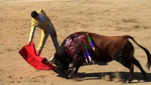 bull toro corrida