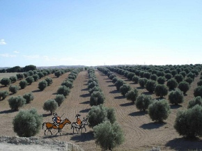 olive plantation madrid, Spain