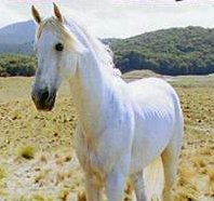 shadowfax lord of the rings