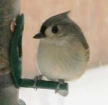 daves-bird