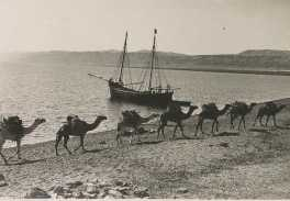 camels transporting wheat to port22