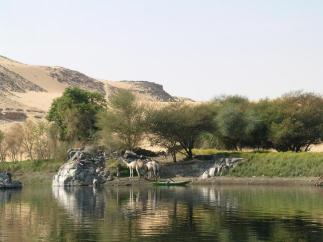 Egypt camels on the Nile