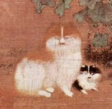 cats in china