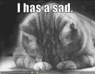 ref tn_funny-pictures-sad-cat-blackandwhite1