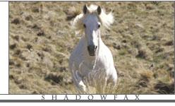 guide_horses_pho_shadowfax
