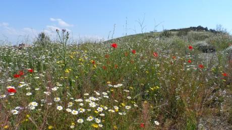 madrid wildflowers 2013
