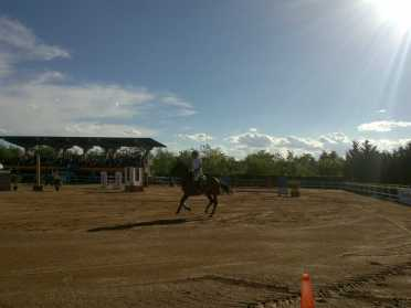 horse gallop competition by MAO